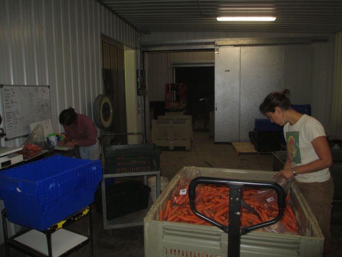bagging carrots