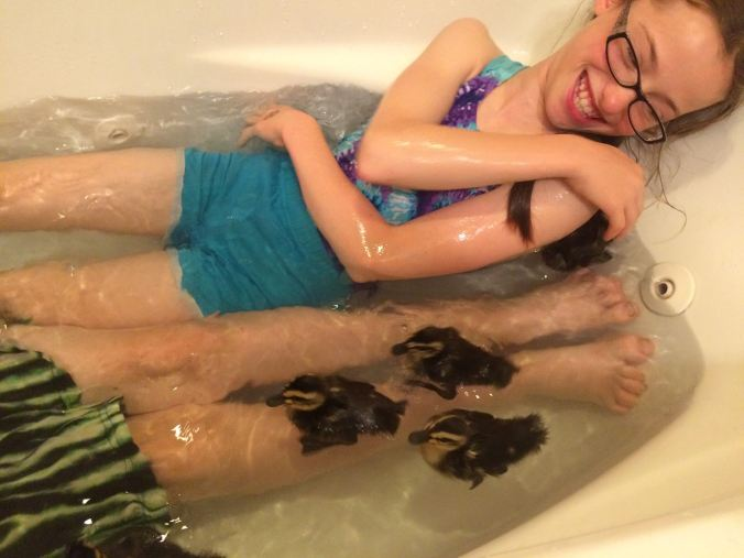 ducklings in bath
